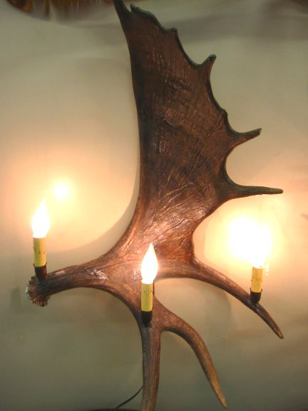 Antler Wall Sconces made in Colorado of Natural Real Mule Deer